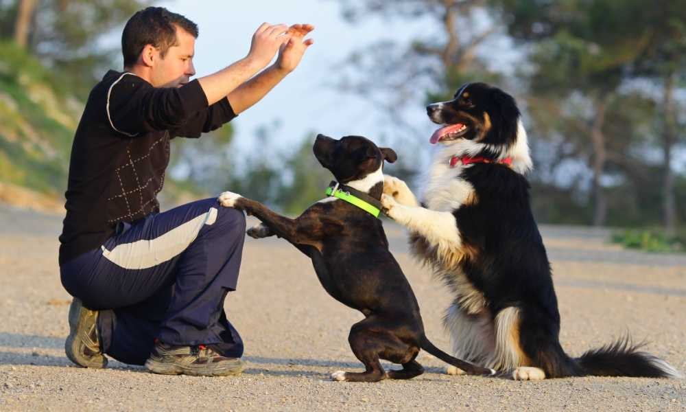 Dog Training Commands List