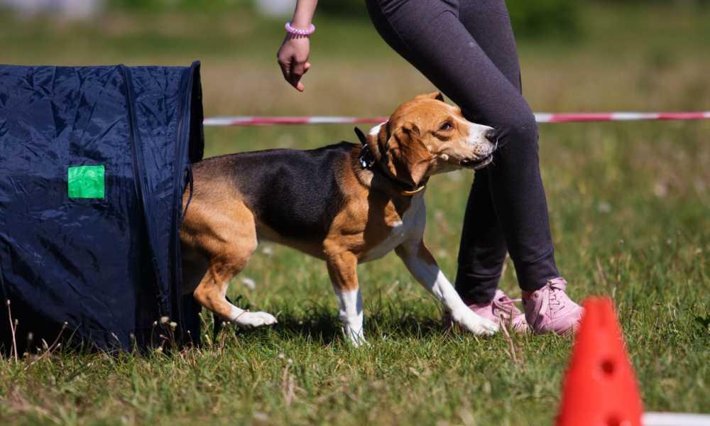 Dog Training Methods