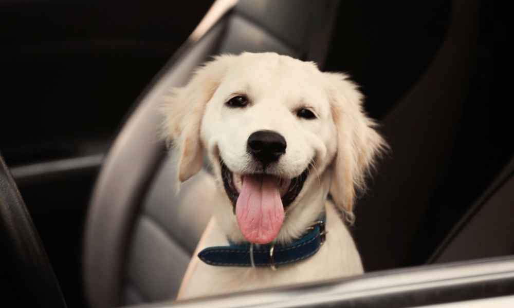 Are Bark Collars Safe for Dogs