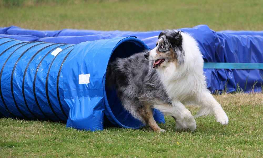 Best Agility Training Tunnel