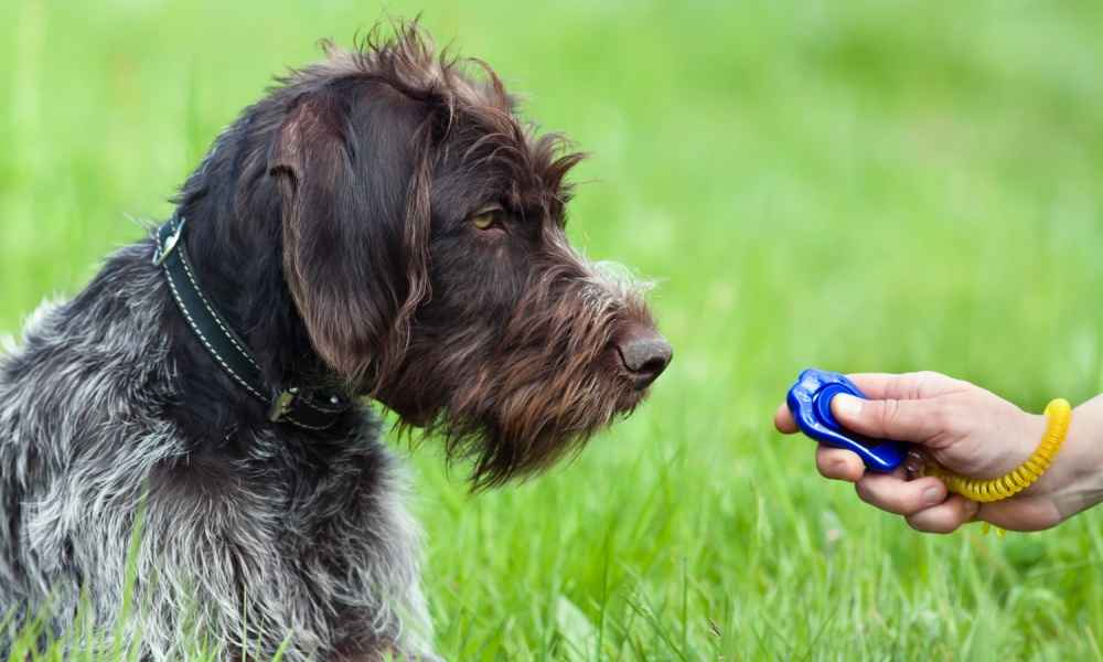 Clicker Dog Training