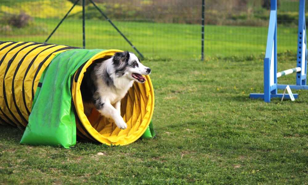 Cool Runners Dog Agility Tunnel Review