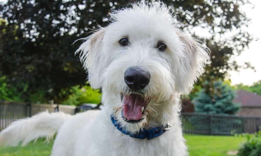 Elecane Dog Bark Collar Review