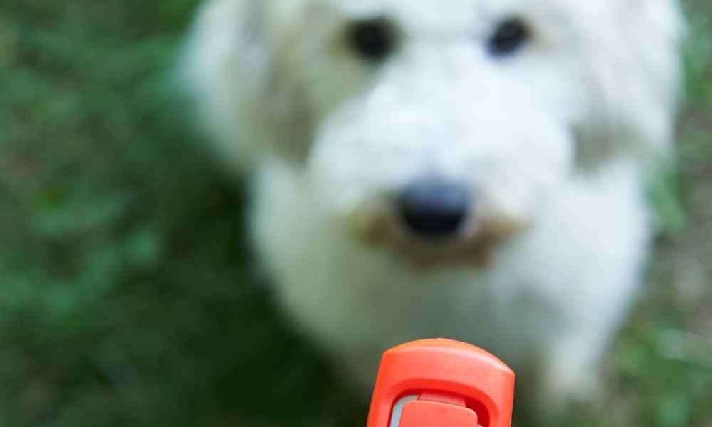 Introducing Your Dog to Clicker Training