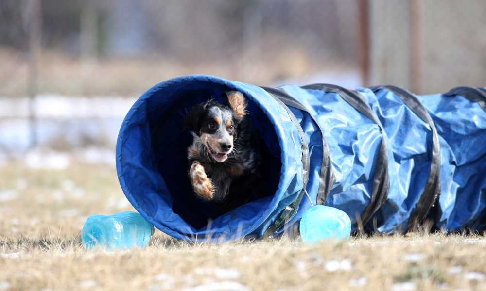JAXPETY Agility Tunnel Review