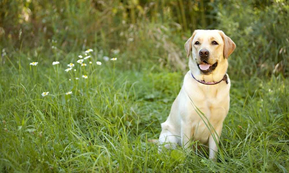LOVATIC Dog Bark Collar Review