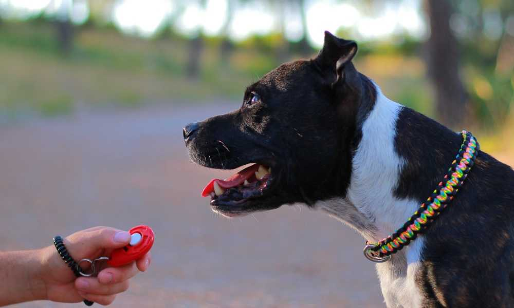 Mighty Paw Dog Training Clicker Review