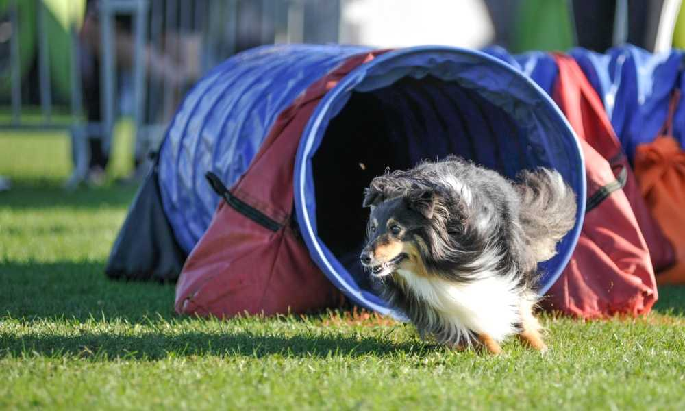 Pacific Play Tent Agility Dog Training Chute Review