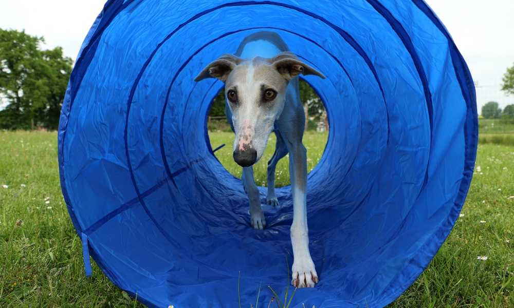 PawHut 16' Agility Tunnel Review