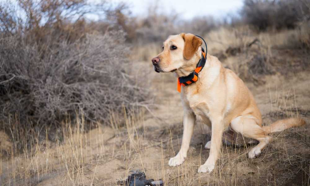 Petyeah Dog Bark Collar Review