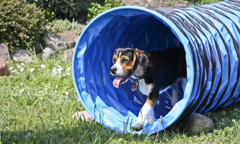 Rosewood Dog Agility Tunnel Review