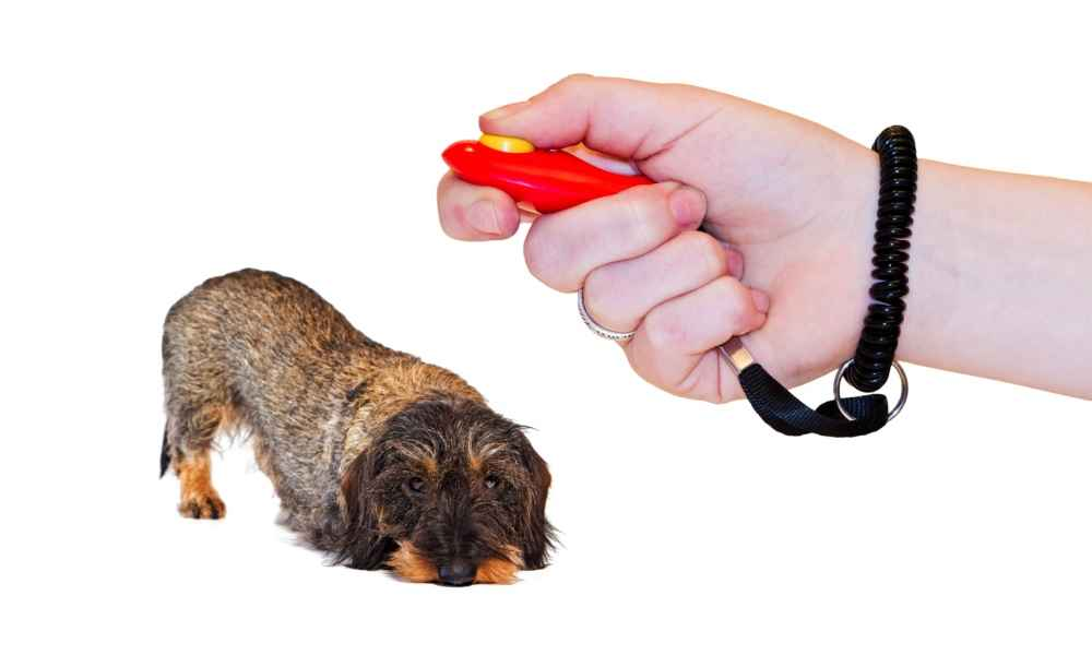 Rules for Dog Clicker Training