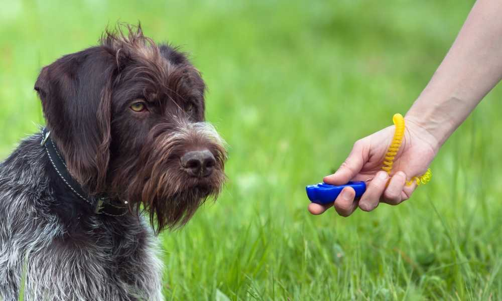 The Company of Animals Clicker Dog Trainer Review