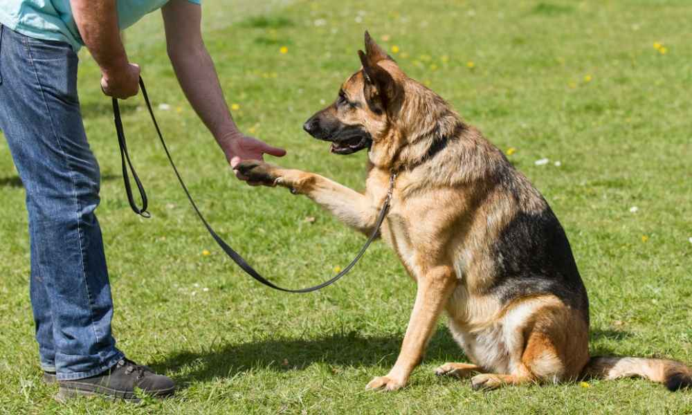 Traditional Dog Training