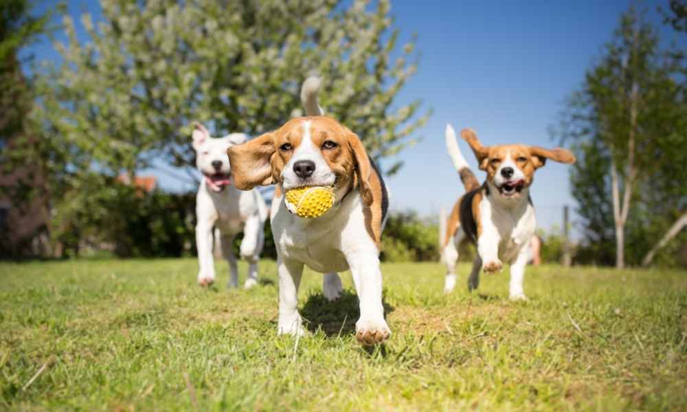 When to Start Obedience Training for Puppies