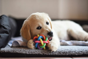 Best Toys to Mentally Stimulate Your Puppy