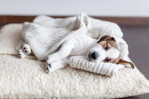Best Dog Beds for 2019