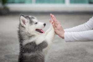What is the Recommended Space Between a Dog's Collar?