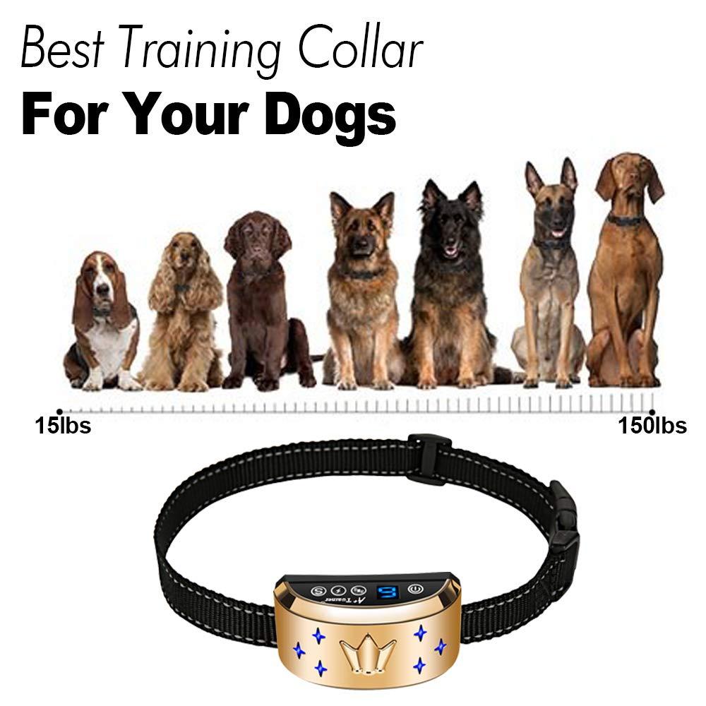 D-Collar Dog Bark Collar: Review
