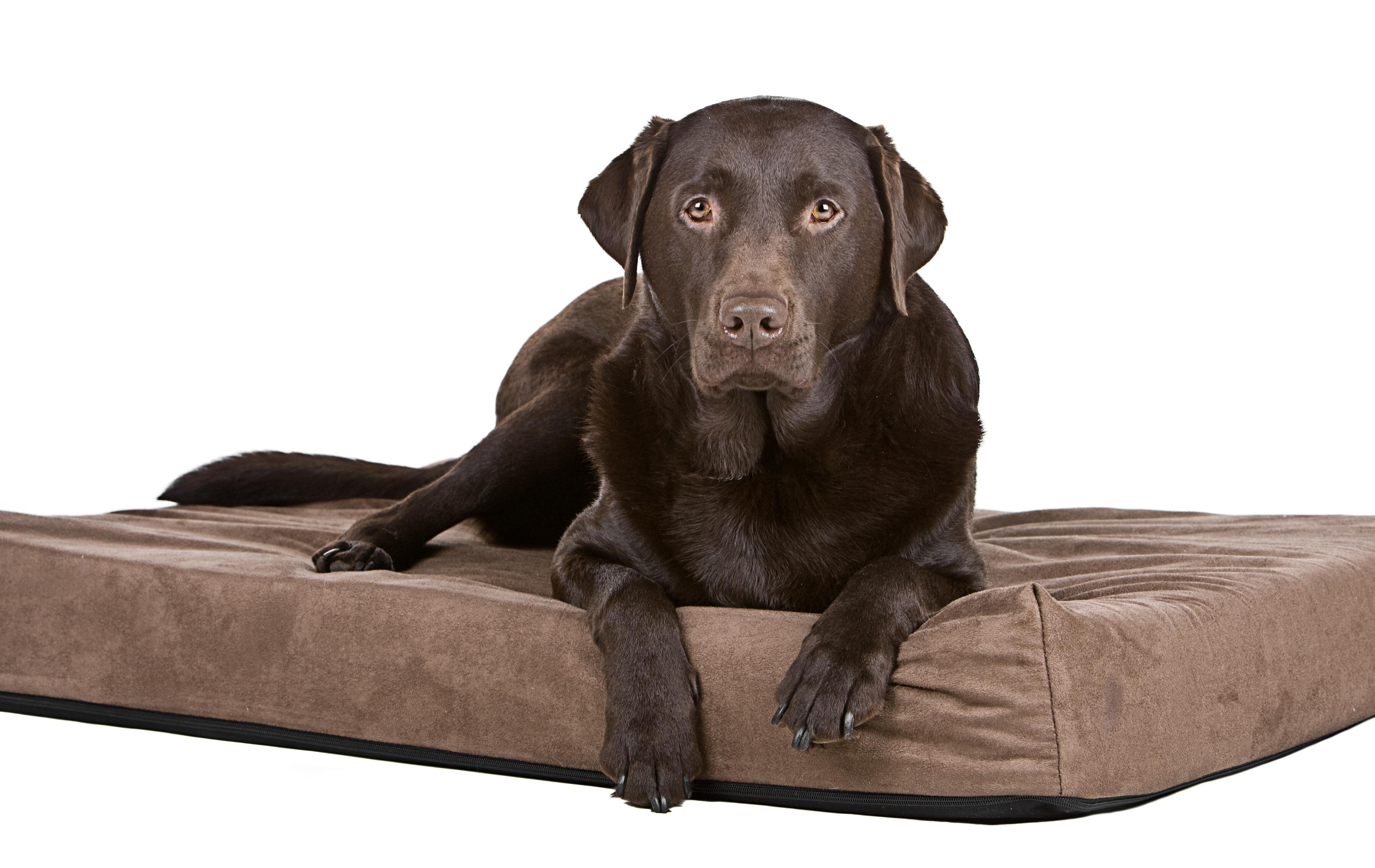 Orthopedic vs. Memory Foam Dog Bed