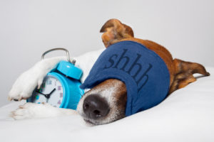How to Train a Dog to Sleep in a Dog Bed
