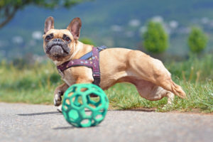 Best Interactive Dog Toys of 2020