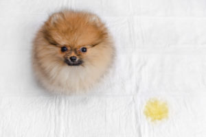 How to Clean Dog Pee From a Bed