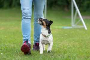 Easy Commands to Teach a Dog
