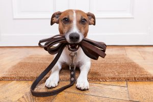 Best Leashes for Training Dogs of 2020