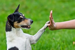 Do Dogs Respond to Positive Reinforcement?