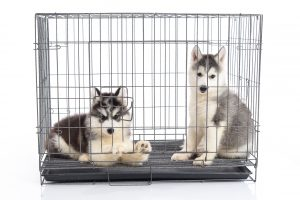 Best Dog Crate Beds of 2020