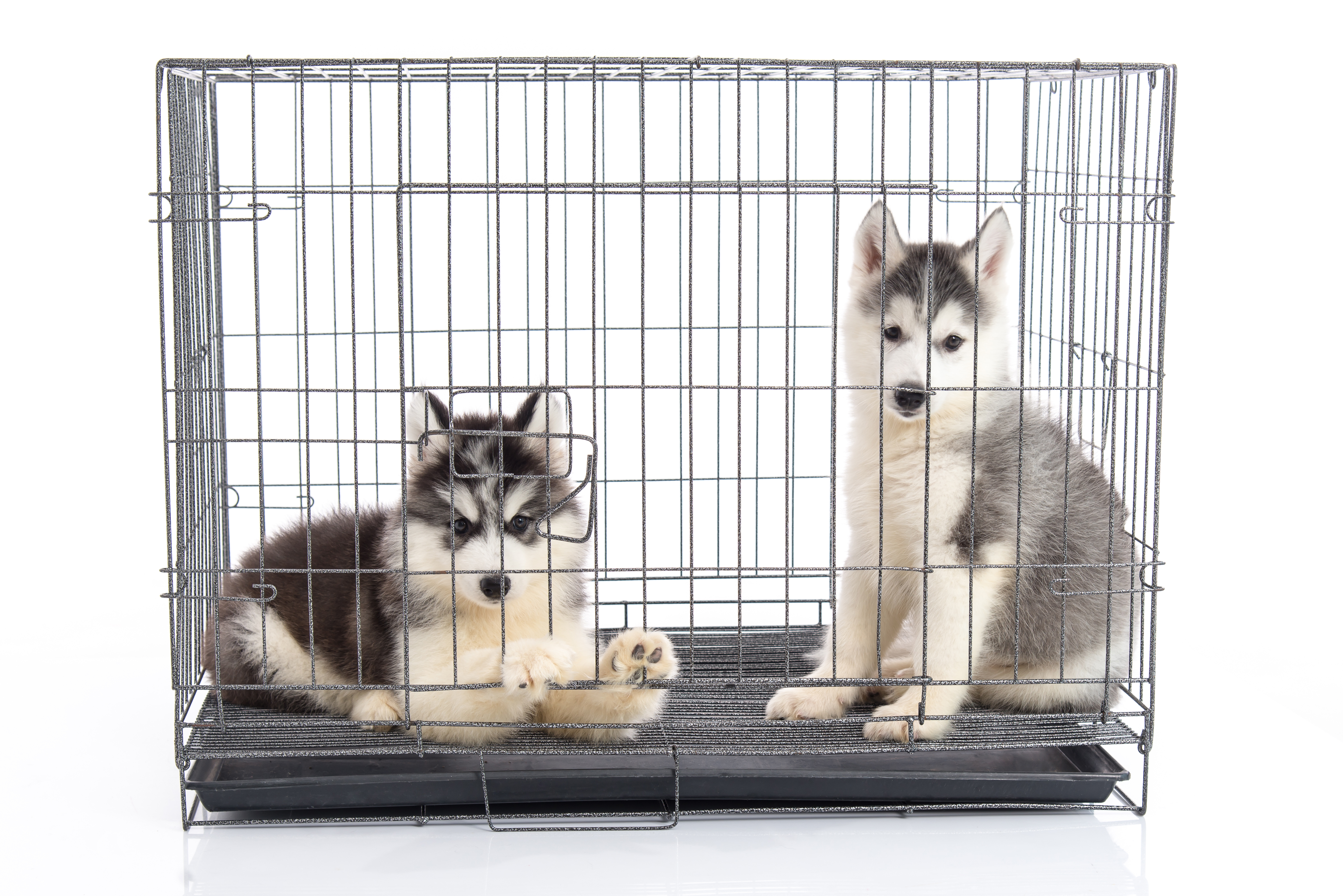 best dog crate beds