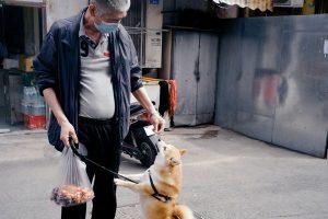 Best Dog Training Treat Bags