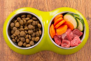 Healthiest Dog Foods