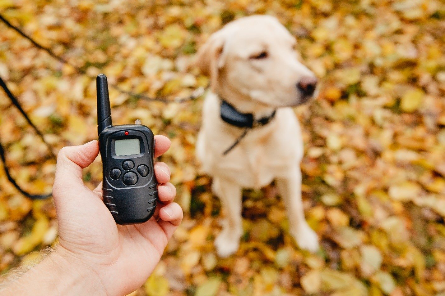 Best Vibrating Dog Collars for Training Your Dog Shock-Free