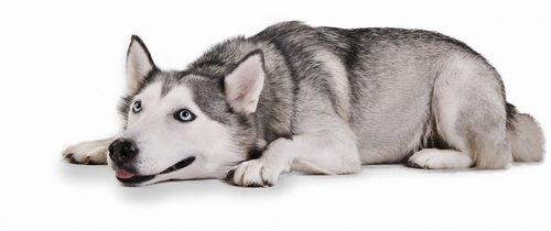 Dog Lie Down