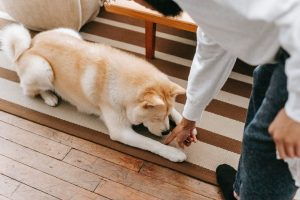 10 Essential Dog Training Hand Signals and How to Use Them