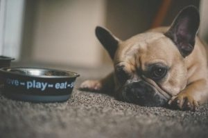 How Long Does It Take for a Dog to Digest Food – 7 Interesting Facts