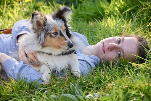 Affection dog