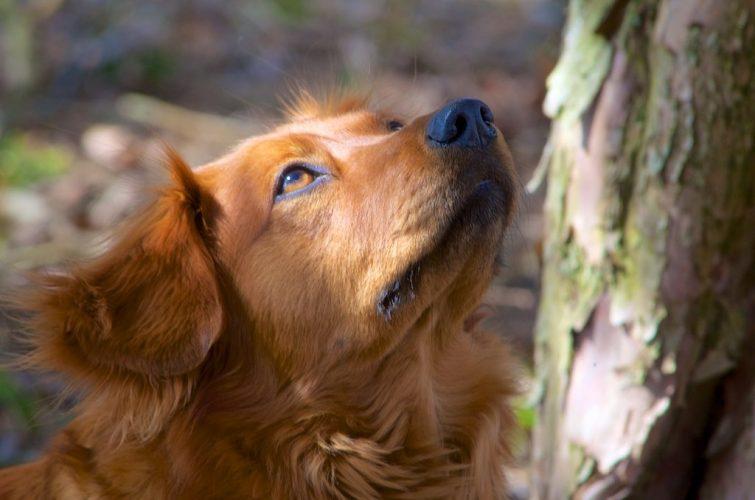 Canine Instinct