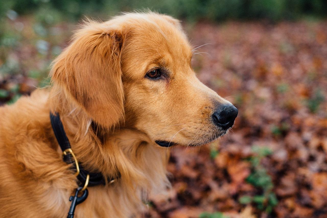 Dog Collar be