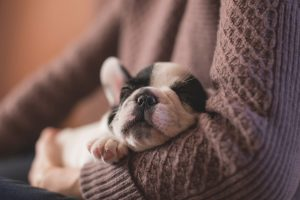 10 Dog Breeds That Sleep a Lot – And Will Let You Sleep In