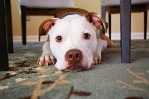 Why Do Dogs Lay on Your Feet – Here's 8 Reasons!