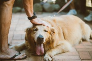How to Teach a Dog to Lay Down – 4 Pro Tips