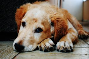 How Long Can Dogs Go Without Eating- All You Need to Know