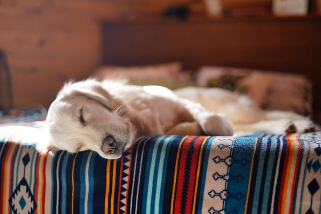 Dangerous Reasons Your Dog Snores