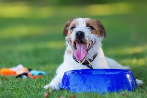 Why Won't My Dog Drink Water?