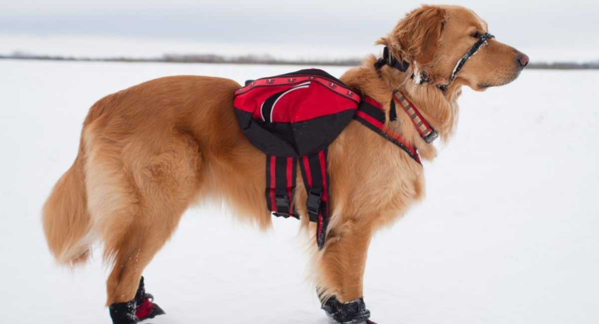 The Best Tactical Dog Backpack for 2021