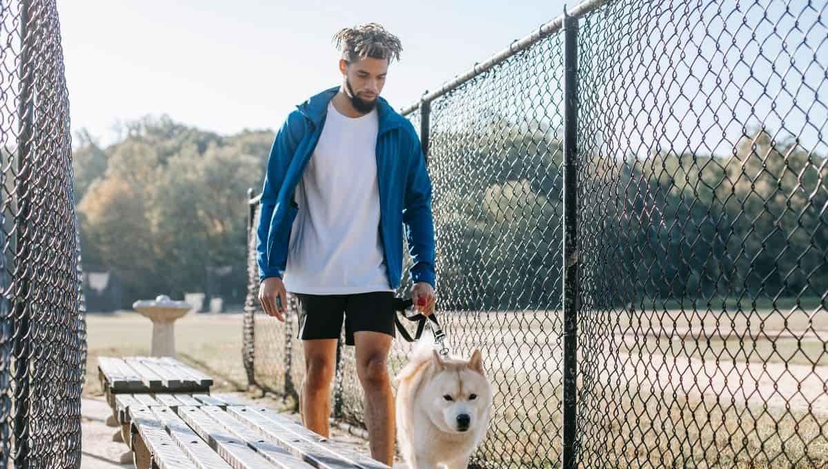 Training Dog on Electric Fence