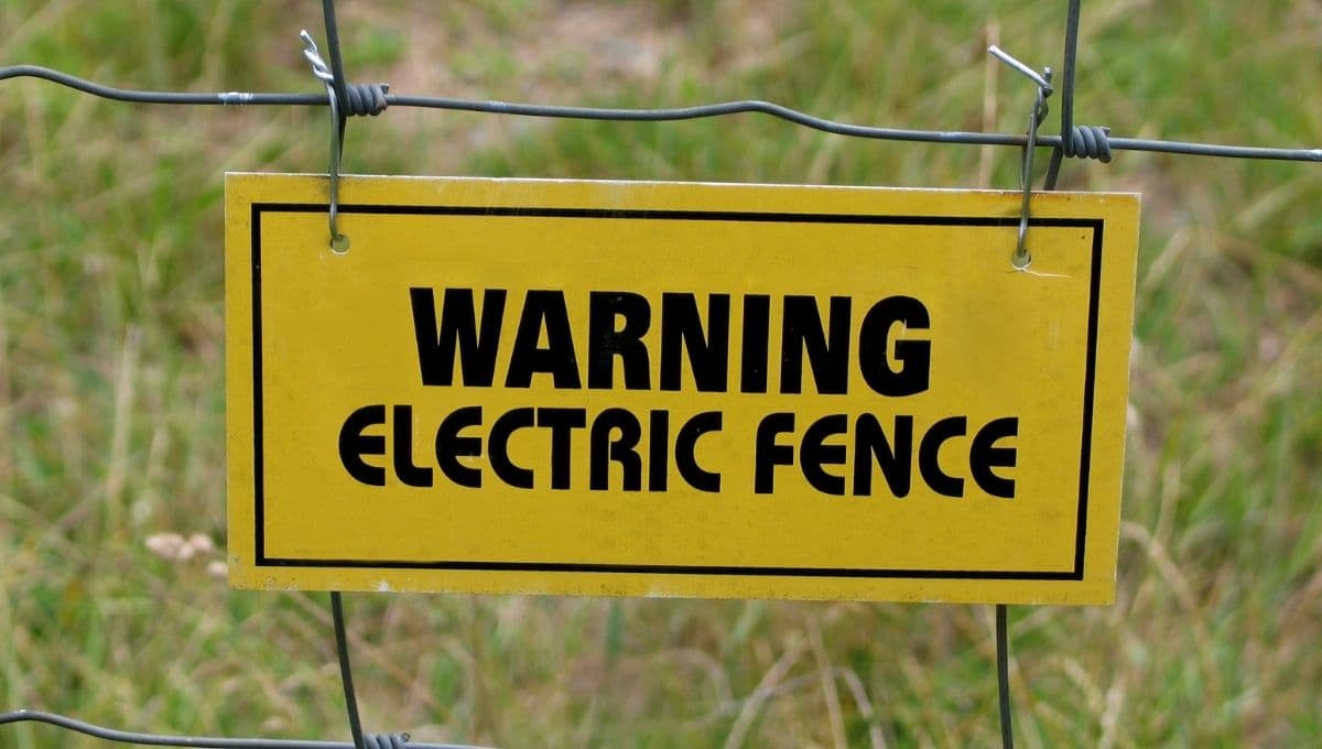 Training Dog on Electric Fence: A How-To Guide